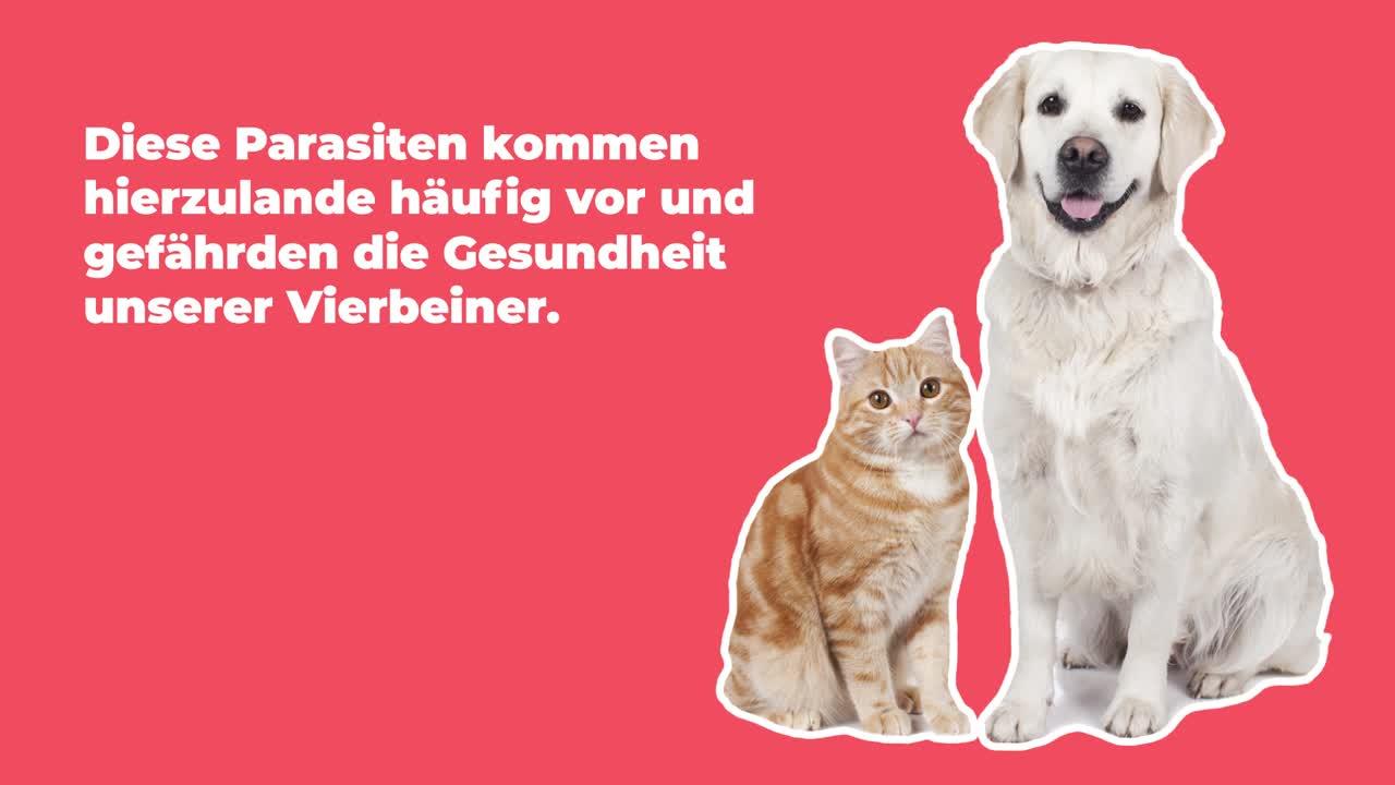 Entwurmung Hund / Katze